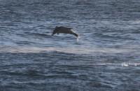 dolphin_7234